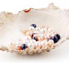 Starostlivosť  o perly